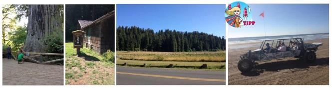 Im Redwood Forest stehen einige der höchsten und dicksten Bäume der Welt. Kommt Euch das Bild bekannt vor? Hier wurde E.T. gedreht und flog über die Baumgipfel in den Horizont. Eine Sandbuggy Tour in den Oregon Dunes ist Spaß pur!
